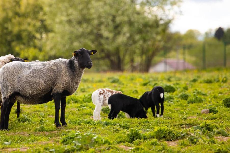 Обитатели «Фермы М2»
